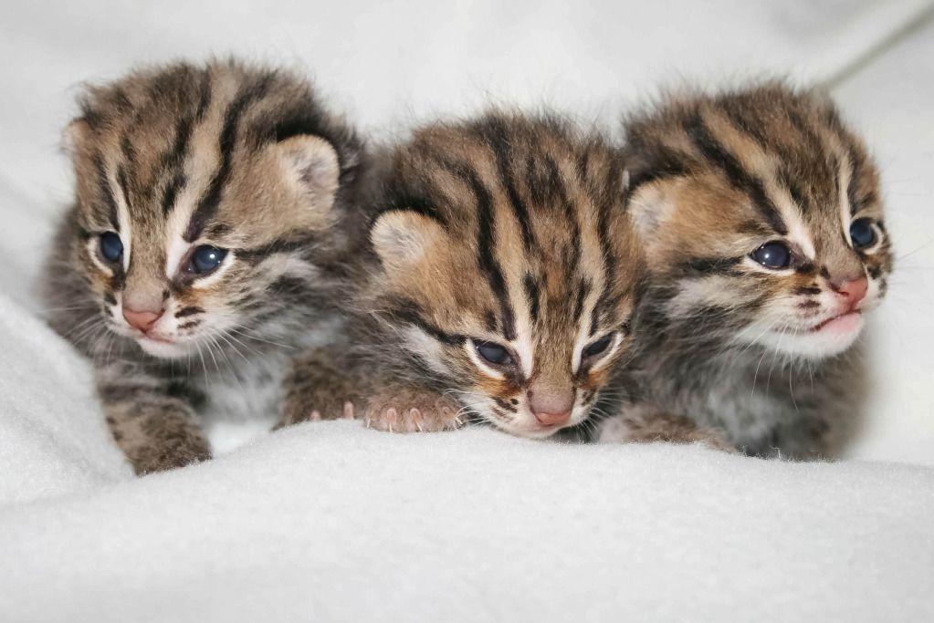 Western New York Cat Adoption