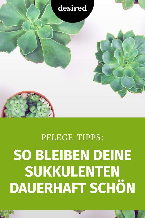 Sukkulenten richtig pflegen: So bleiben sie dauerhaft schön | desired.de