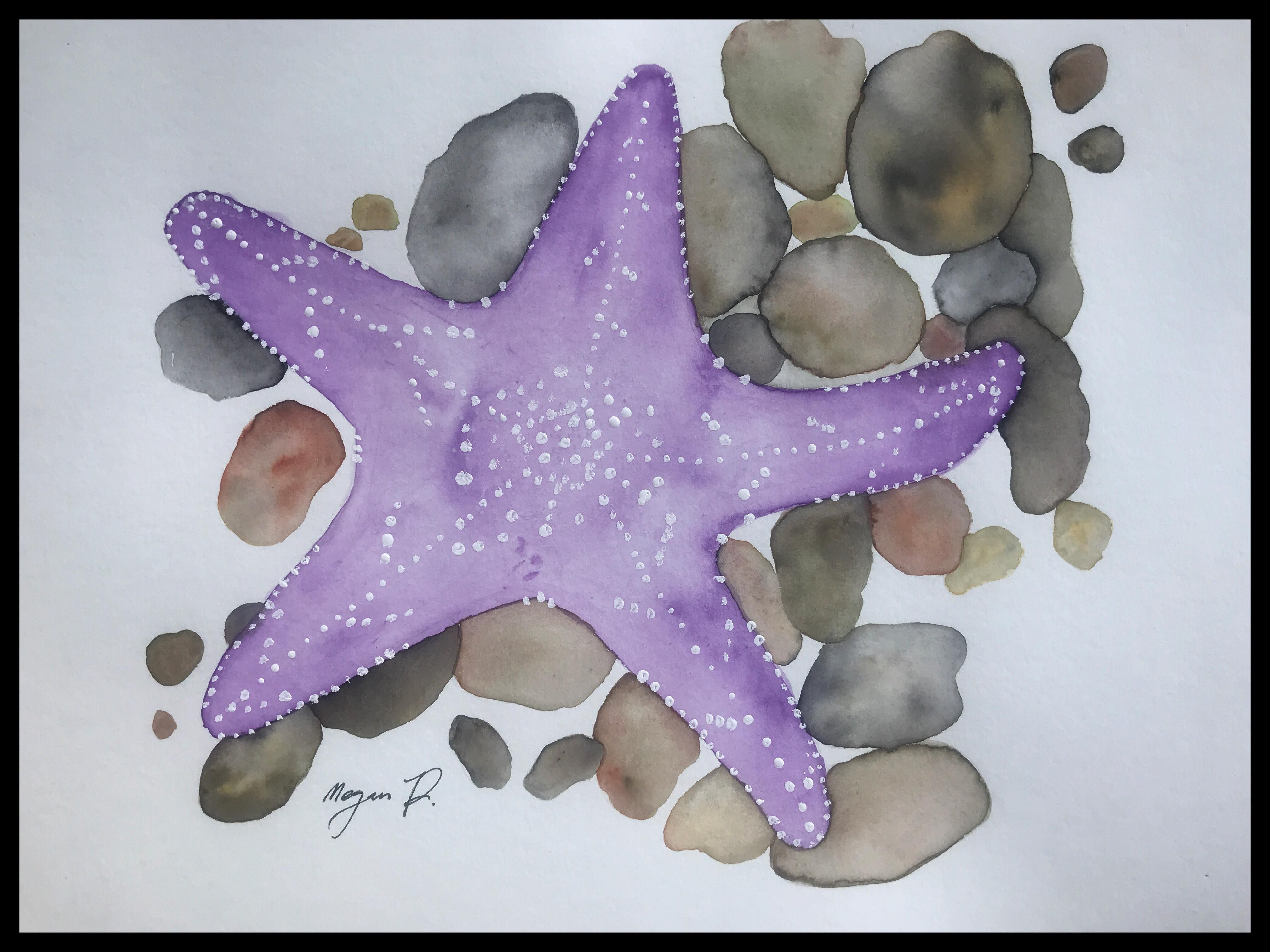 Focal Point Starfish The Star Fish Is Not Neutral So The Color