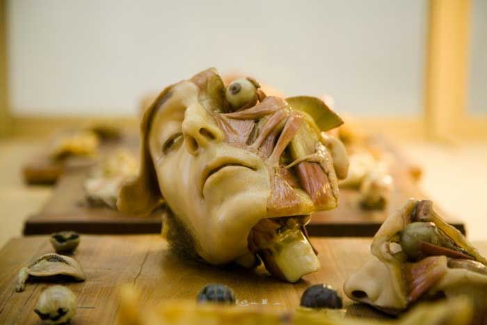 Museum Of Anatomical Waxes Luigi Cattezneo Museo Delle Cere