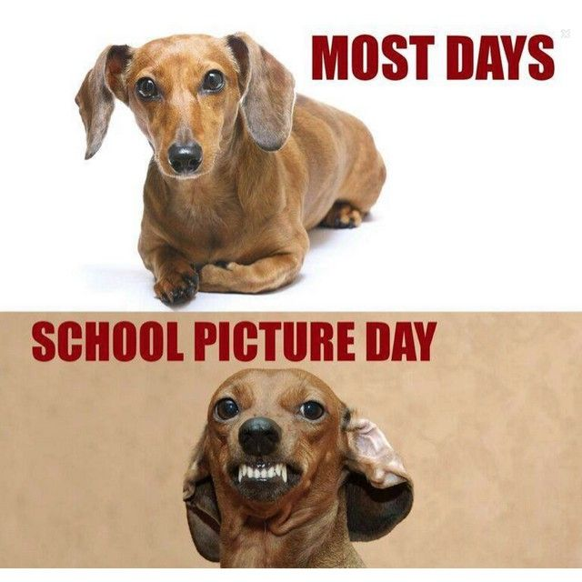 Pin By Dachshund Rescue Of Bucks On Smile Of The Day Dachshund Memes Funny Dachshund Funny Pictures For Kids