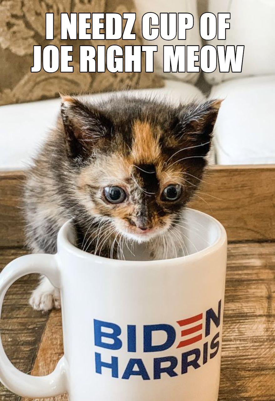 Lolcatz Meme Cute Kitten For Joe Biden Adorable Kitten Kittens Cutest Kitten