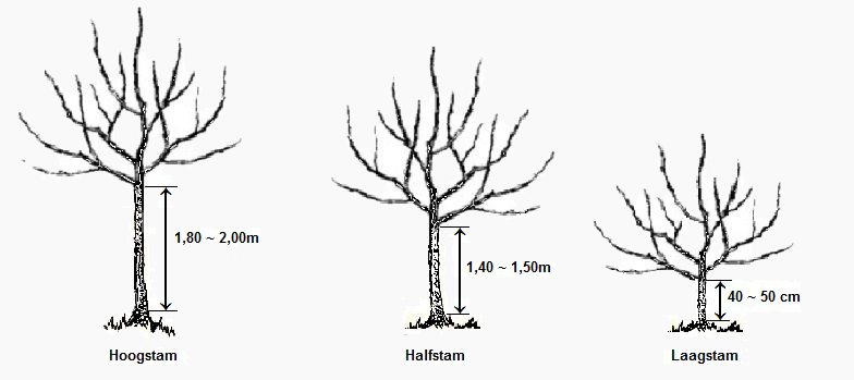 fruitboom hoogstam halfstam laagstam tuin trees to. Black Bedroom Furniture Sets. Home Design Ideas