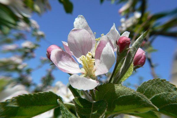 Orchard days Jul 29-Aug 3