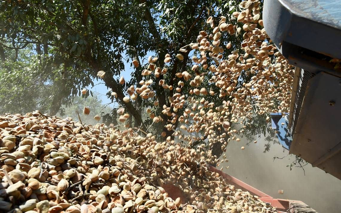 #news #trends #health #food Almond farmers unshaken by lower prices, cooling markets amid bumper crop