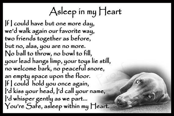 Weimaraner Dog Pet Loss Memorial Bereavement sympa