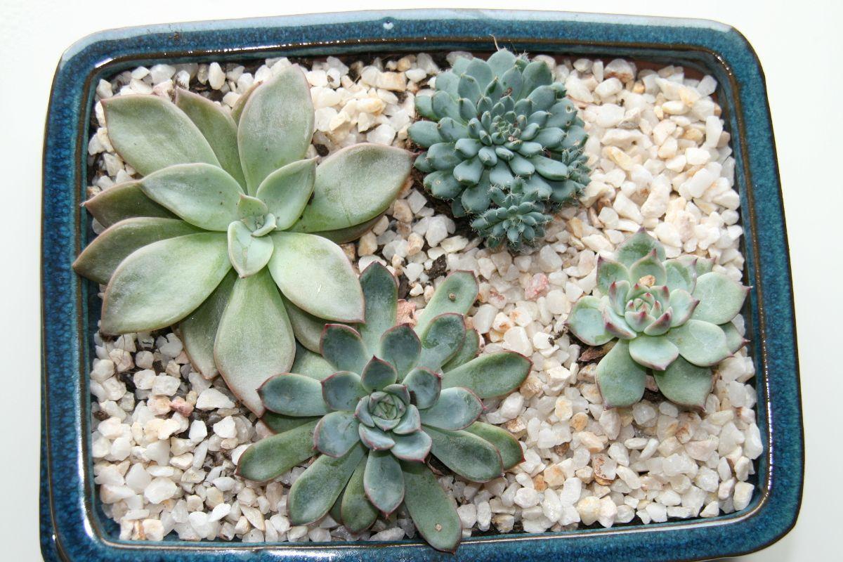 Comment Arroser Les Plantes Grasses Et Les Succulentes Succulentes Plantes Grasses Arroser Plante