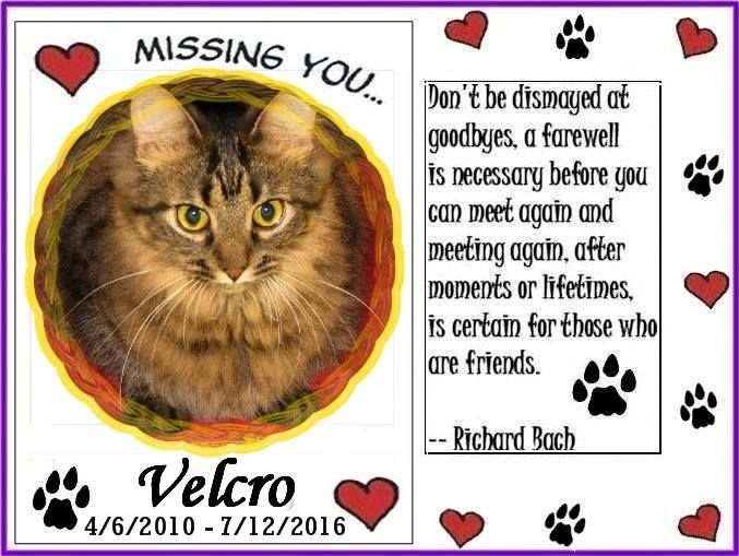 #OTRB #RAINBOWBRIDGE Beloved VELCRO - In Loving Memory (Memorial #1)