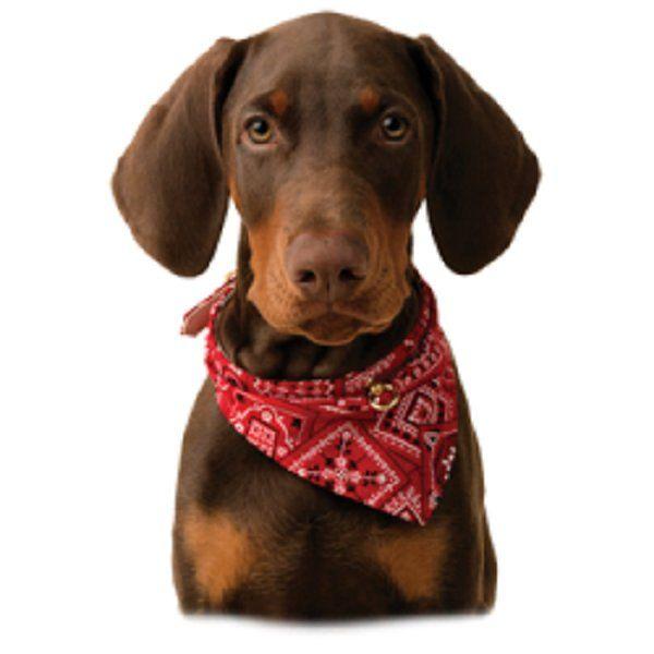 Red Dachshund T Shirt, Bandanna Dog, Quilt Fabric Block