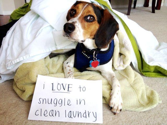 Snuggle Beagle