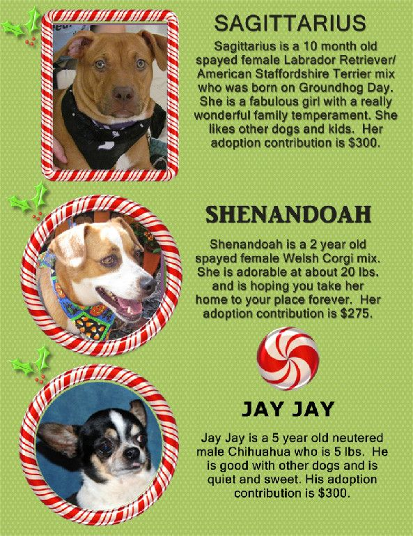 Dogs Available From Brooke S Legacy Rescue Naples Fl Dogs And Kids Staffordshire Terrier Mix Dog Waiting