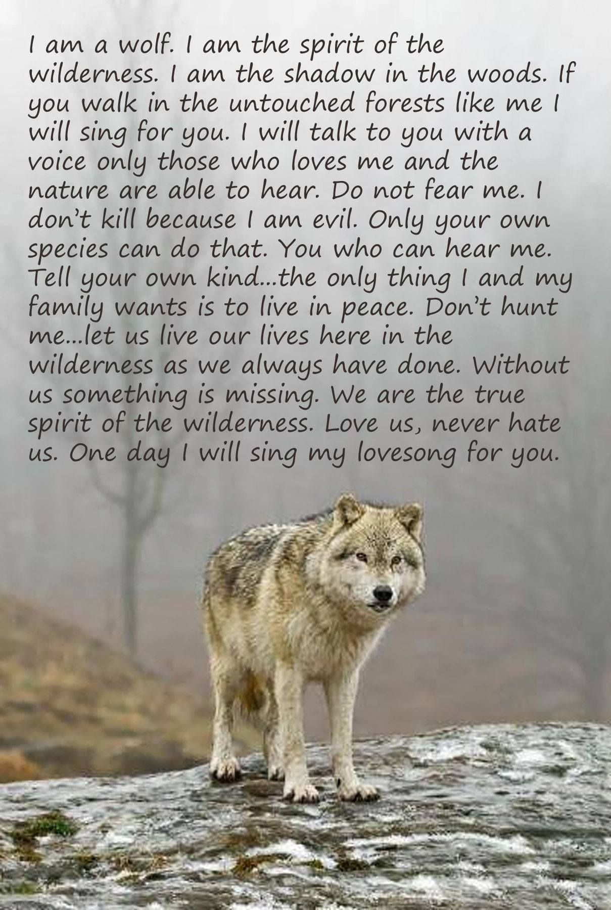 Spirit Of The Wilderness Loup Esprit Du Loup Citations