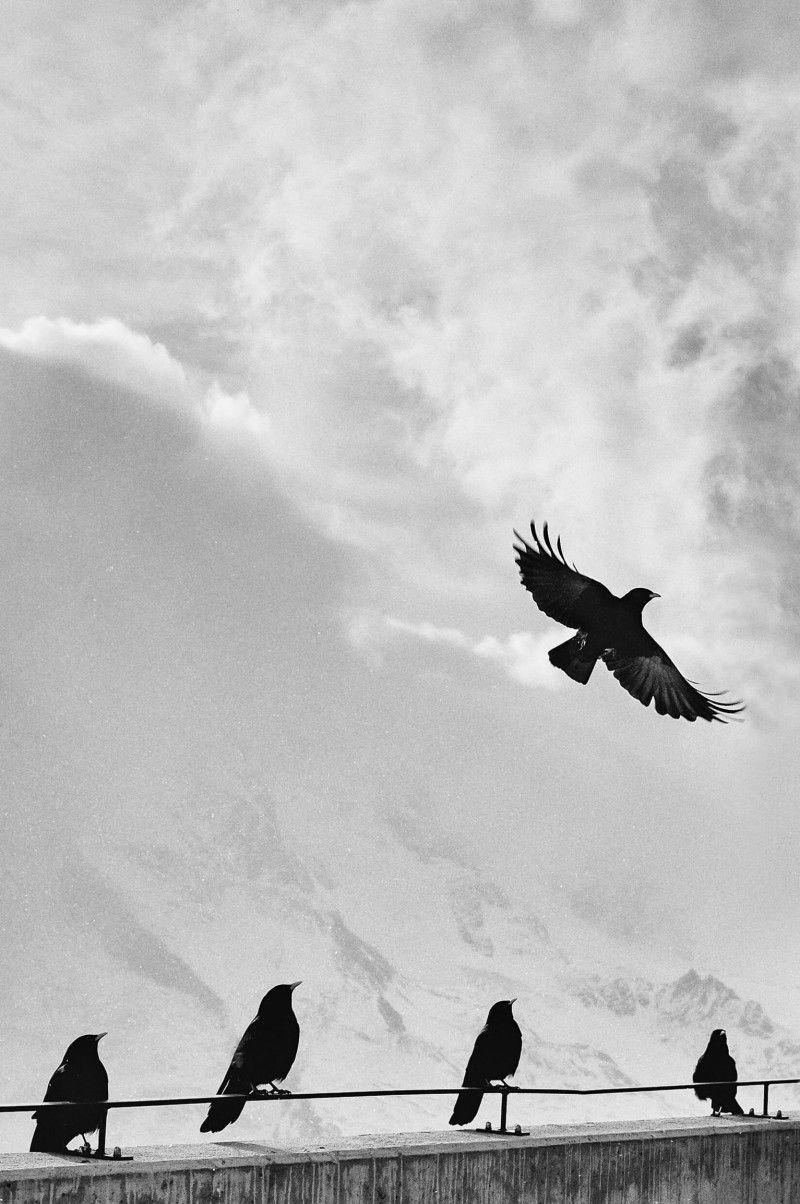 أجمل صور 2019 افضل خلفيات وصور 2019 اجمل الصور الخلفيات Black And White Birds Bird Pictures Bird Photo