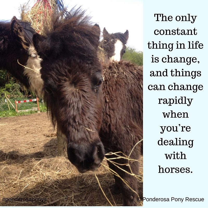 #lifechanges with #horses