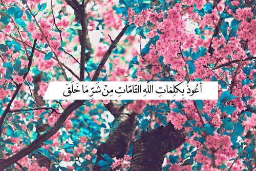 أعوذ بكلمات الله التامات من شر ما خلق Flower Header Twitter Cover Photo Facebook Cover Photos