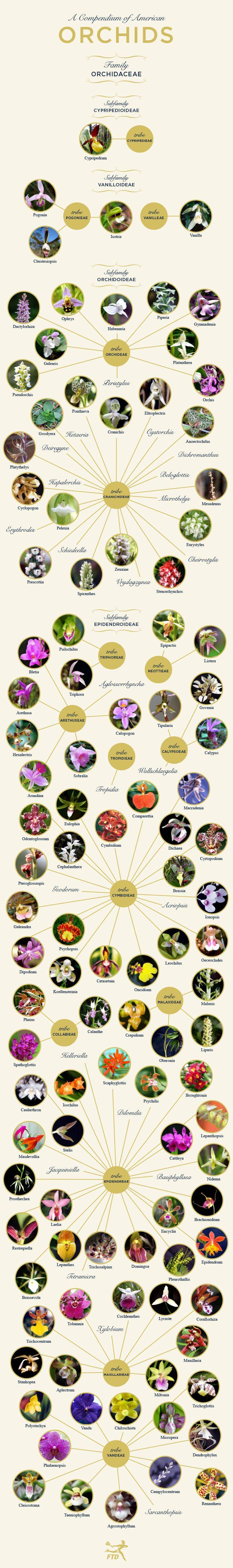 Types of Orchids: A Visual Compendium | Types of orchids ...