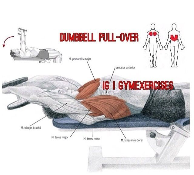 Dumbell Pullover Chest Day Dumbell Pullover Chest