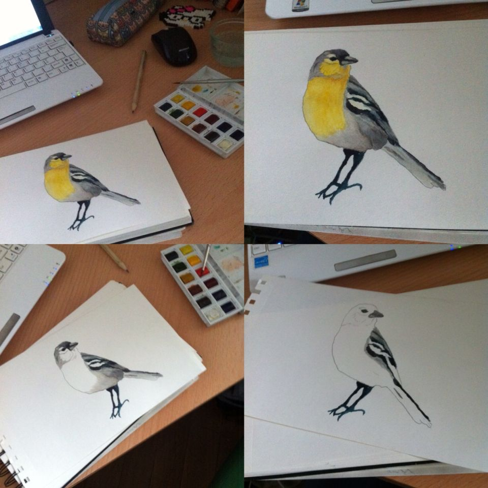 #bird #motacillaflava #drawing #watercolour by Isa Figueira 2015