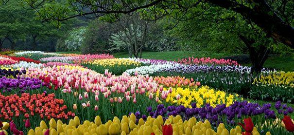 b1fc5d68d21478153459639713758487 - How Much Is A Longwood Gardens Membership