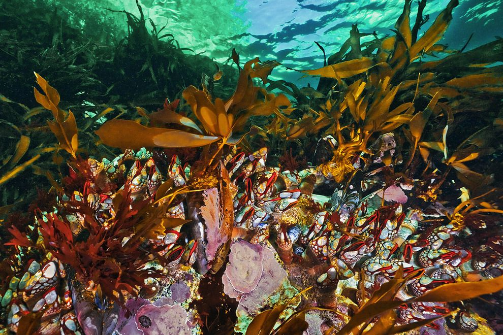 Beneath cold seas the underwater wilderness of the
