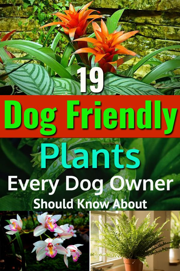 19 Dog Friendly Plants Every Dog Owner Should Know About -   16 plants Green projects ideas