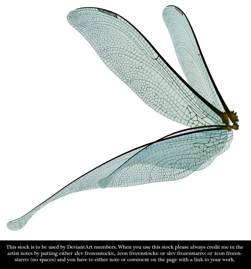 Dragonfly Fairy Wings Render Fairy Wings Dragonfly Dragonfly Art