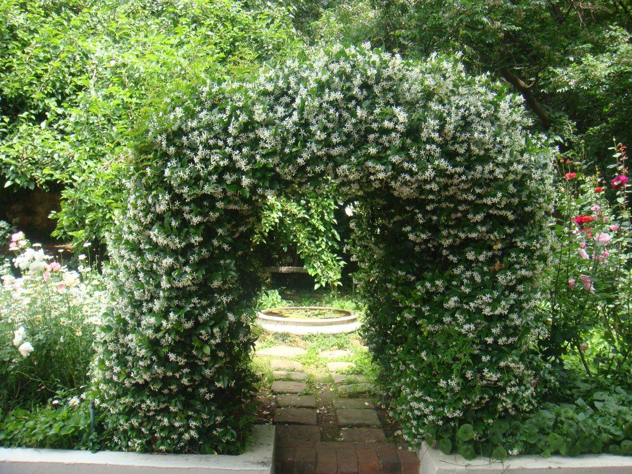 Star jasmine arch | Garden inspiration, Secret garden ...