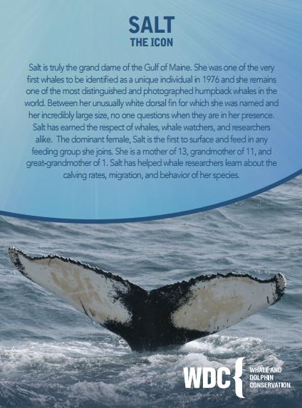 Lyric and WDC | WDC and Lyric | Adopt a whale, Lyrics, Whale