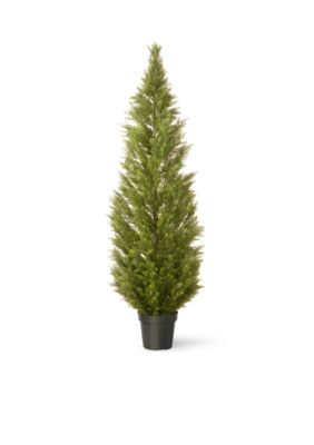 National Tree Company  Arborvitae With Green Pot - Green - 72 In.