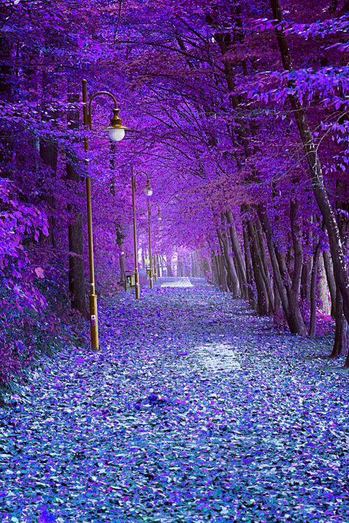 Autumn Alley, Trzcianka, Poland is part of Beautiful places - Autumn Alley, Trzcianka, Poland