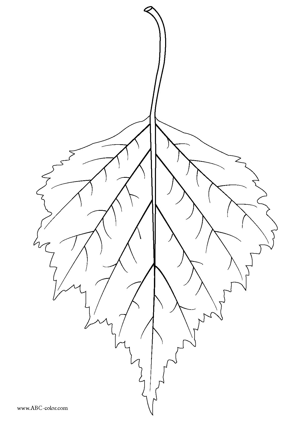 birch leaf Nursery Wall Leaf coloring page Leaf