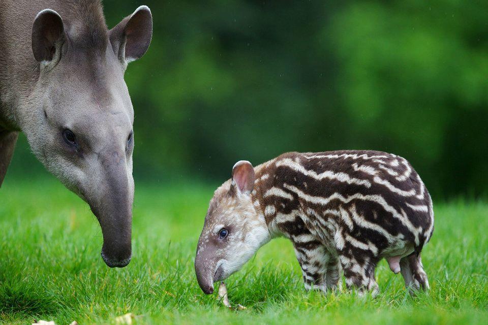 психология фотографии животное с детенышем отель очень поздно