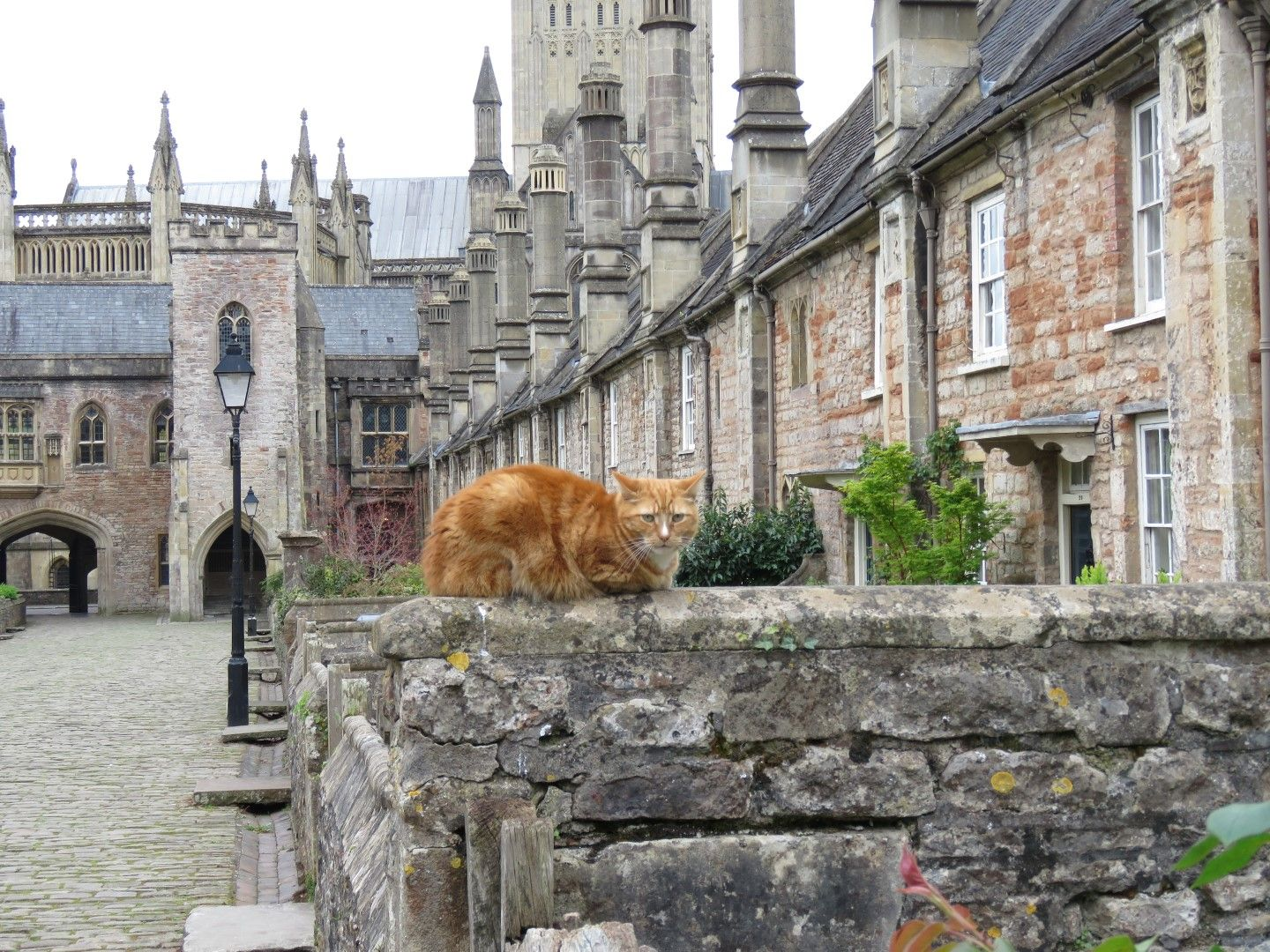 The Cambrians cats of the U.K. image by Alex Brownstein
