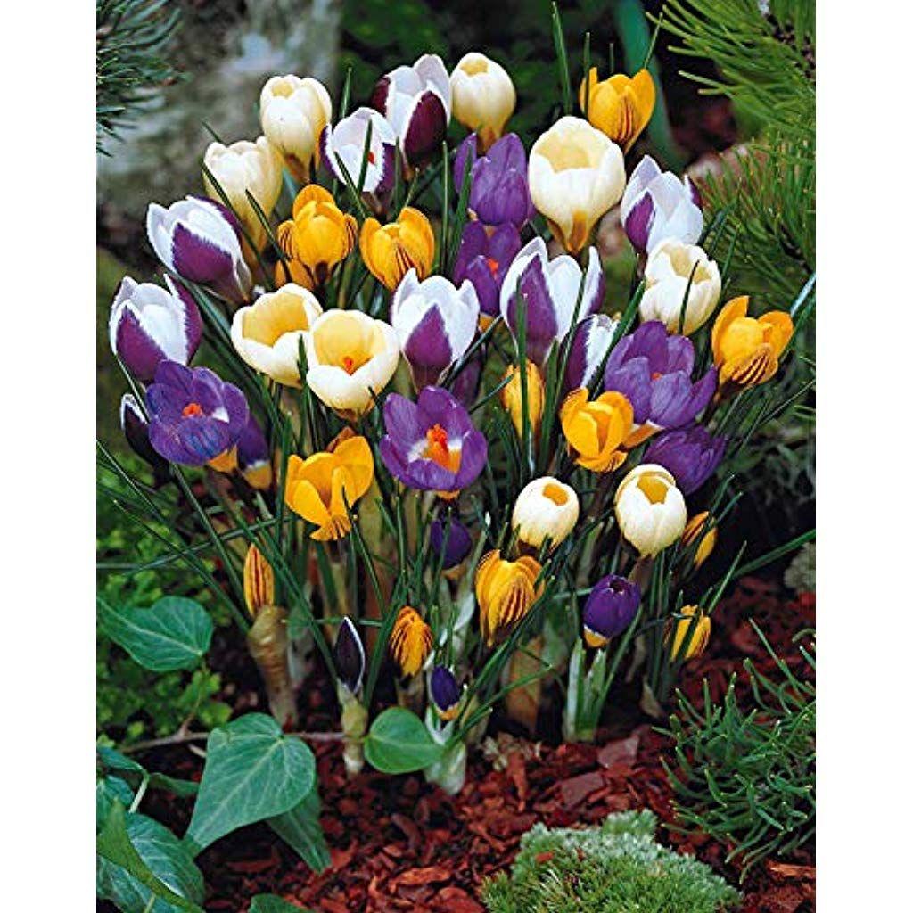 Image du tableau Flowers in the garden de Meg Kreft en