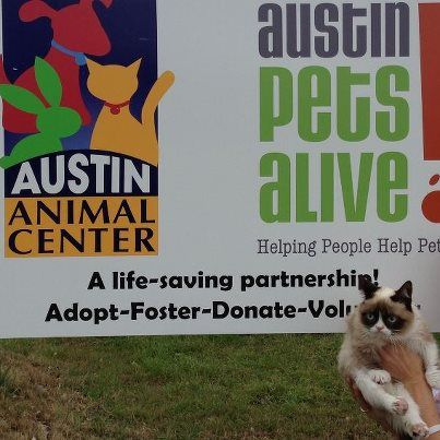 Someone's Giving The Cats At Austin Pets Alive! A Ton Of