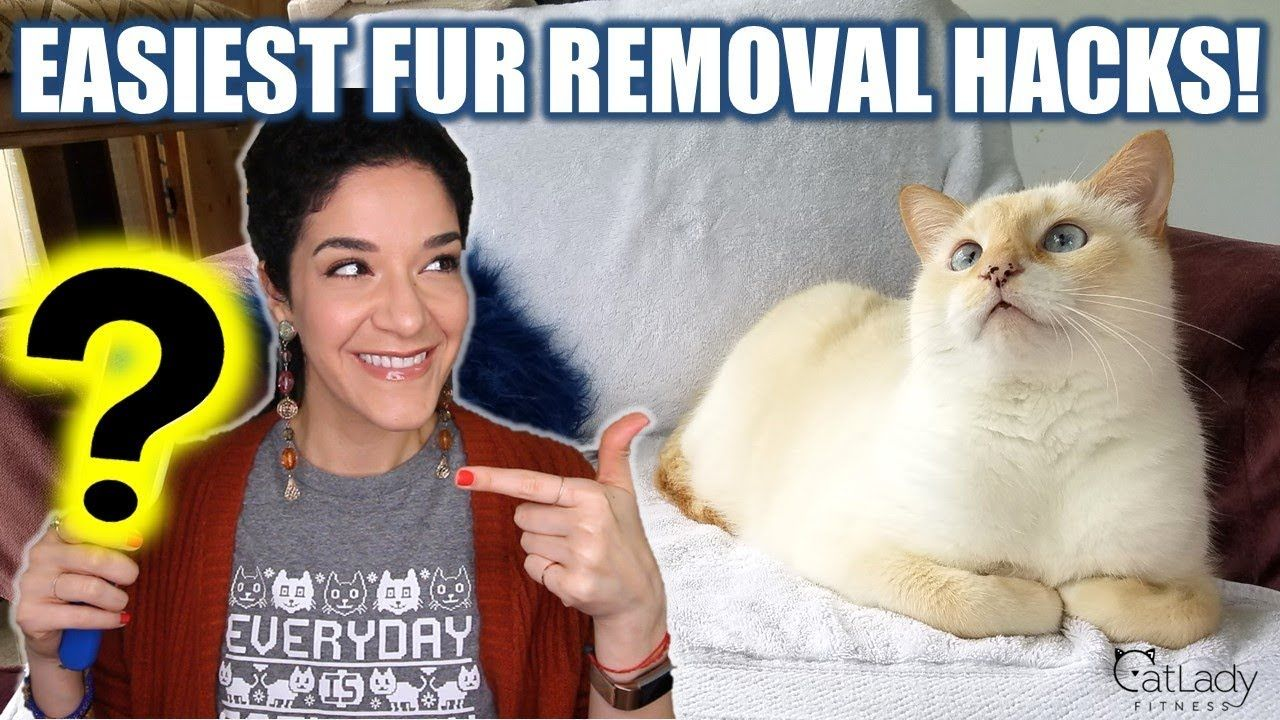 The MOST effective ways to remove cat hair off furniture