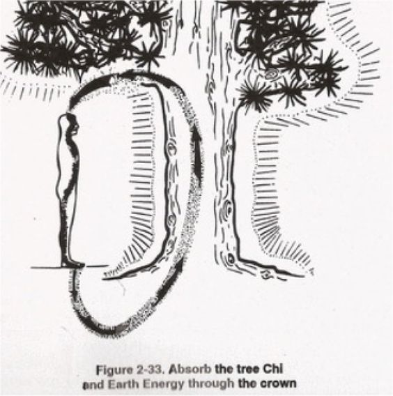 You Can Heal Yourself Using The Chi Energy of Trees According to