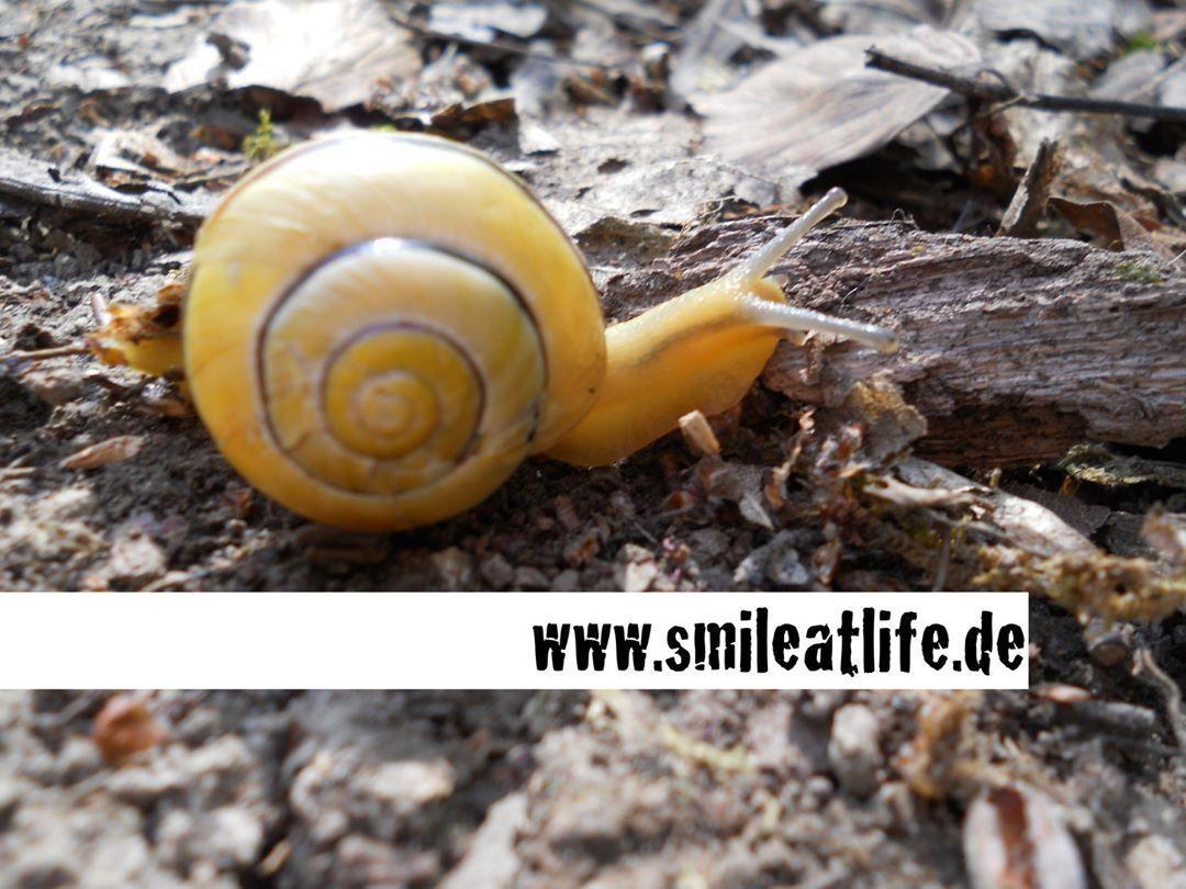 #Schnecke #Naturnah #Leben #Slow #SmileAtLife