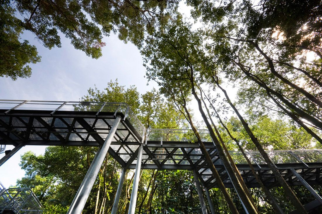 Alexandra Arch Forest Walk By Look Architects 07