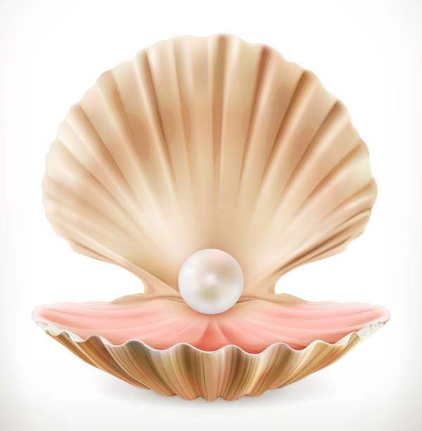 Open Clam Drawing Google Search Oyster Pearl Clams Pearl Logo