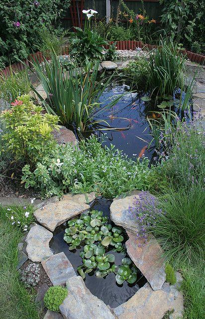 garden pond #2 Bassin, Jardins et Bassin de jardin