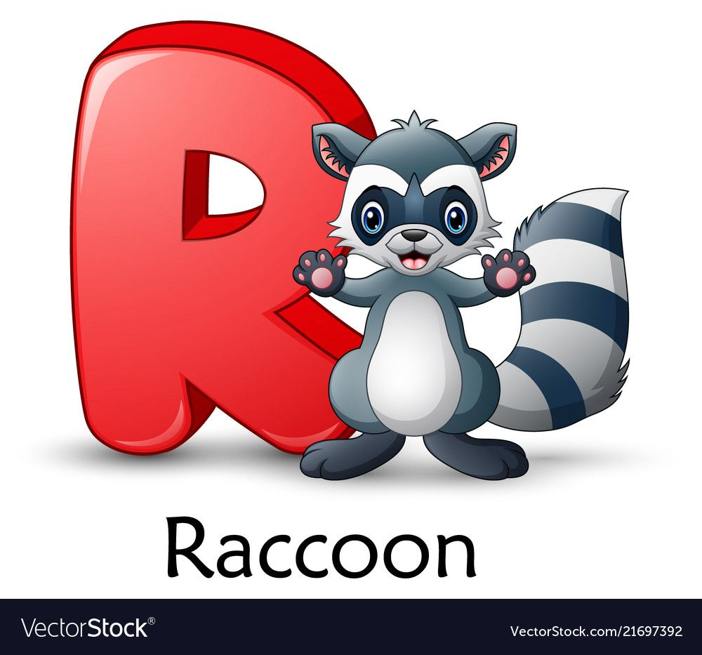 Letter r is for raccoon cartoon alphabet vector image on