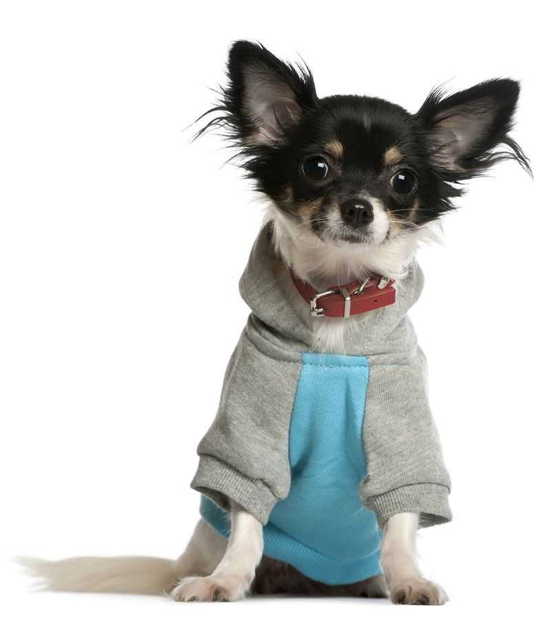 Chihuahua Sweaters Sweaters For Chihuahuas And Small Dogs Chihuahua Sweater Small Dog Coats Chihuahua