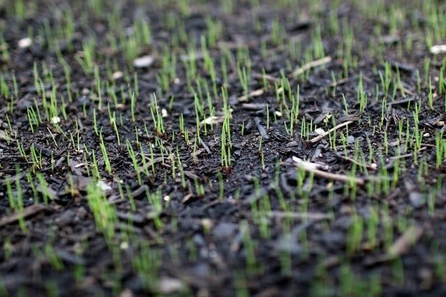 Watering New Grass Seed Grass Seed Water Grass Watering Grass