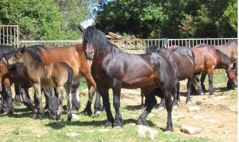 Caballos mayores, cuidados - http://www.noticaballos.com/caballos-mayores-cuidados.html