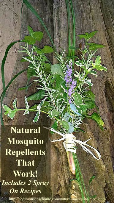 Natural mosquito repellents that work and plants that - Natural insect repellent for gardens ...
