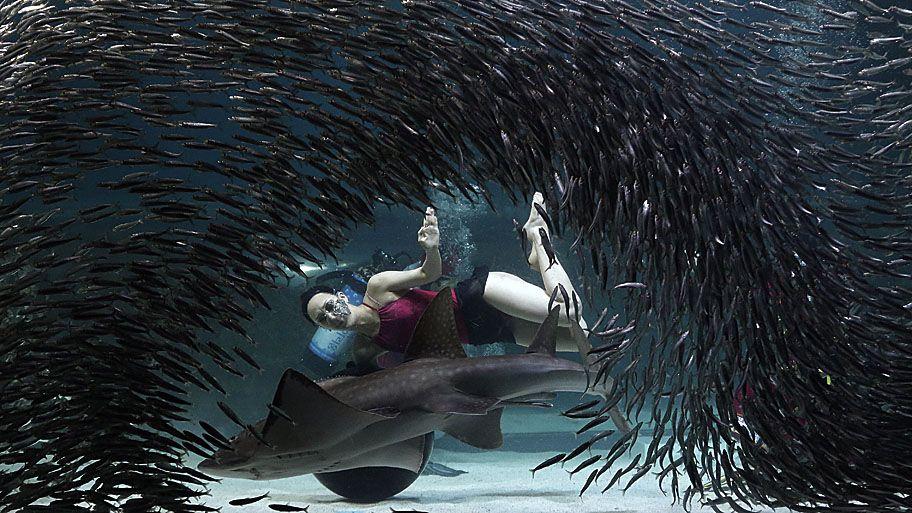- Mergulhadora se apresenta num evento no aquário Coex, em Seul, na Coreia do Sul. O aquário possui 40.000 criaturas do mar e mais de 600 espécies diferentes. Foto: Ahn Young-joon / AP