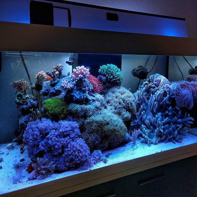 #reefscape #aquarium #aquascaping #aquascape #fish #reefing101 #reeferaddict #reefpack #reeftank #reefers #allmymoneygoestocoral #fishanatic #saltwatergarden #bestaquarium