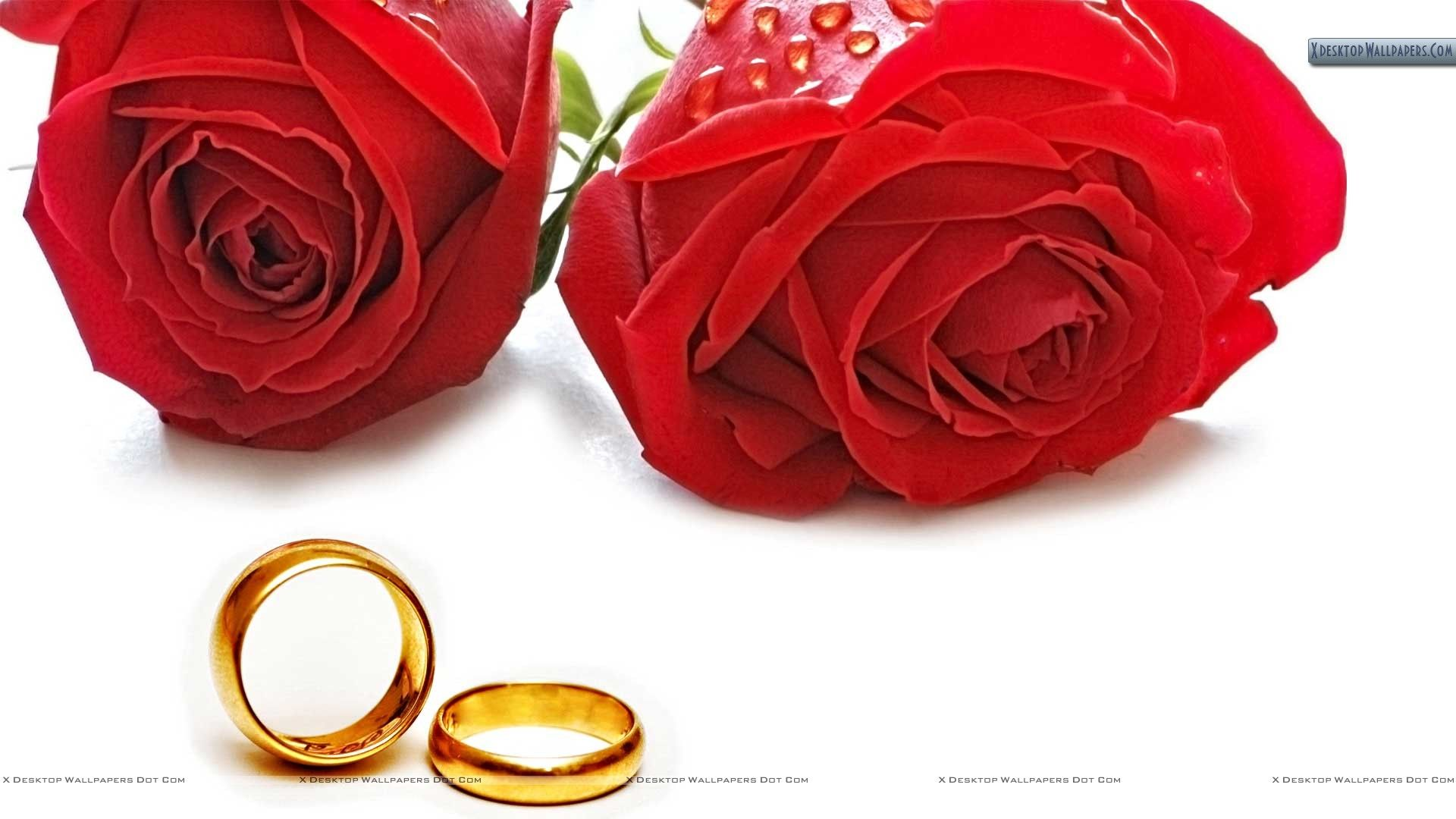 rose wedding ring picture of two roses Red Roses And Golden Wedding Ring Wallpaper