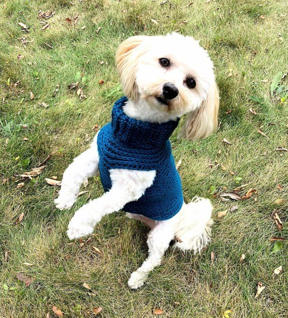 701a7135ba0e dog sweater small, blue dog turtleneck #dogfashion #dogclothes #dogsweaters  #happydoglucky #maltipoo